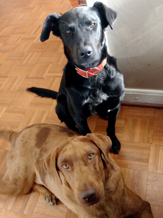 Bessie and Olive, my two most favorite dogs in the whole wide world.